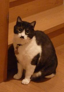 猫のお友だち クロくん 珠ちゃん ビビちゃん編。_a0143140_2354134.jpg