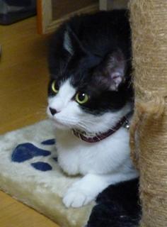 猫のお友だち クロくん 珠ちゃん ビビちゃん編。_a0143140_2362050.jpg