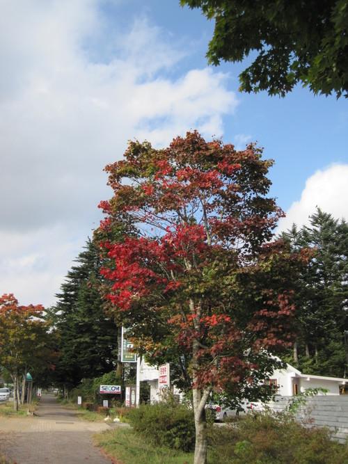 軽井沢の紅葉/ストーングラウンドコーヒー_f0236260_18131581.jpg