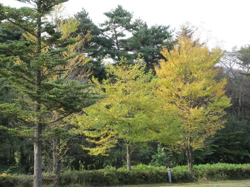 軽井沢の紅葉/ストーングラウンドコーヒー_f0236260_18173078.jpg