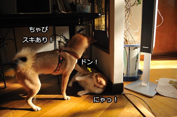 b0141397_1051841.jpg