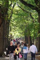 秋のニューヨーク、ミュージアム・マイルにお散歩へ_b0007805_4582410.jpg