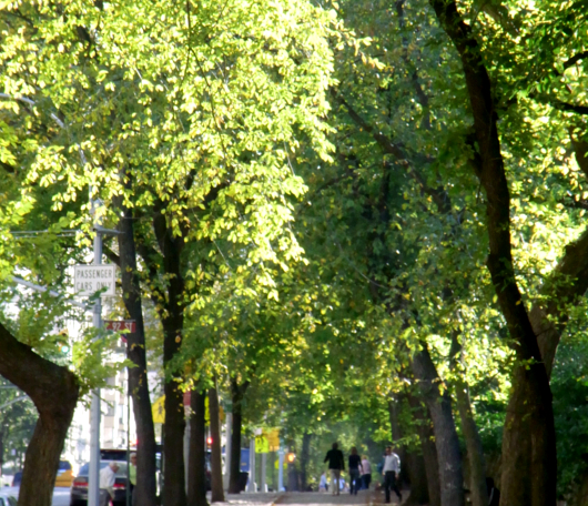 秋のニューヨーク、ミュージアム・マイルにお散歩へ_b0007805_692244.jpg