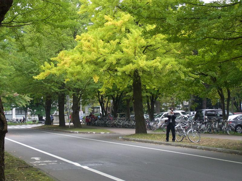 もっと寒い札幌 イチョウ並木黄葉始まる_c0025115_20195085.jpg