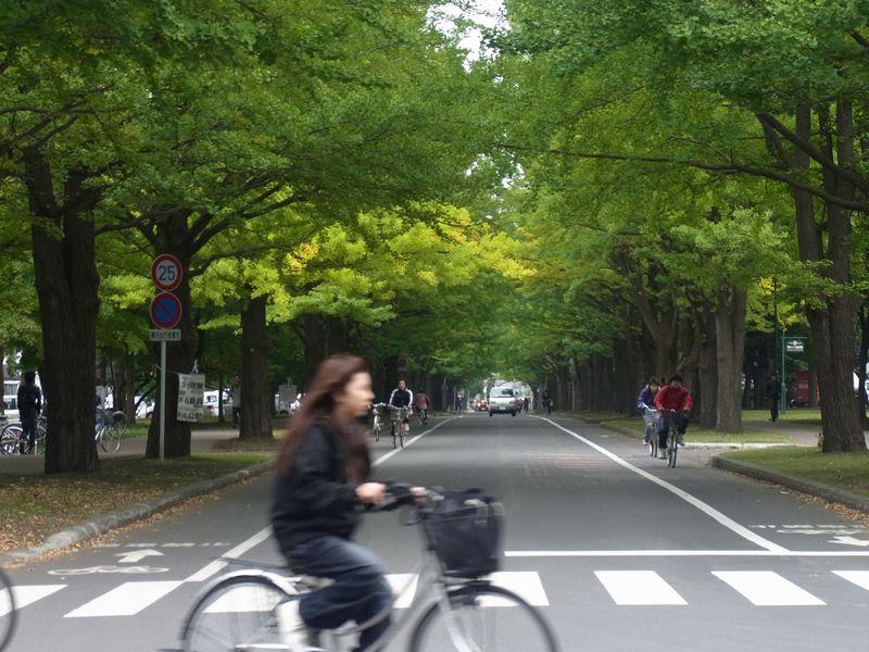 もっと寒い札幌 イチョウ並木黄葉始まる_c0025115_20195755.jpg