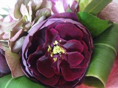 咲きました、ザ・プリンス_f0155431_2374589.jpg