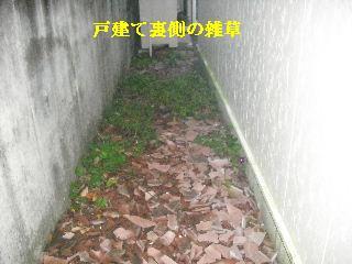 f0031037_2049336.jpg