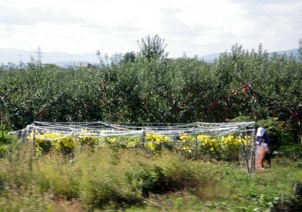 五能線 木造りー弘前、リンゴと田んぼ_a0136293_11565196.jpg