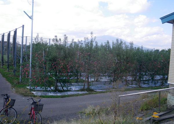 五能線 木造りー弘前、リンゴと田んぼ_a0136293_11575742.jpg