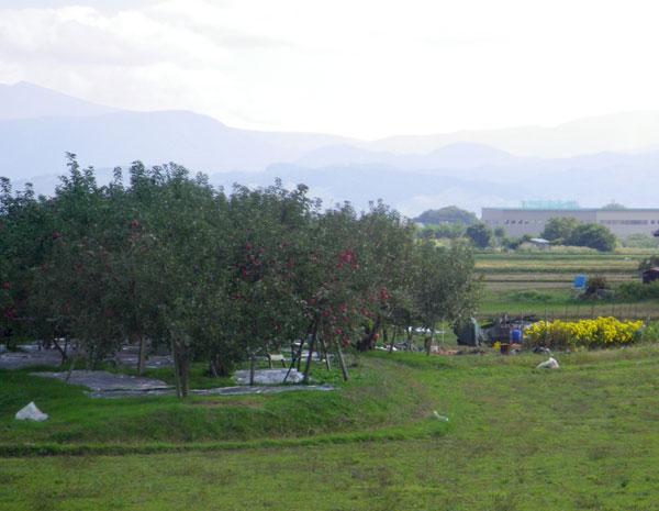 五能線 木造りー弘前、リンゴと田んぼ_a0136293_11592110.jpg