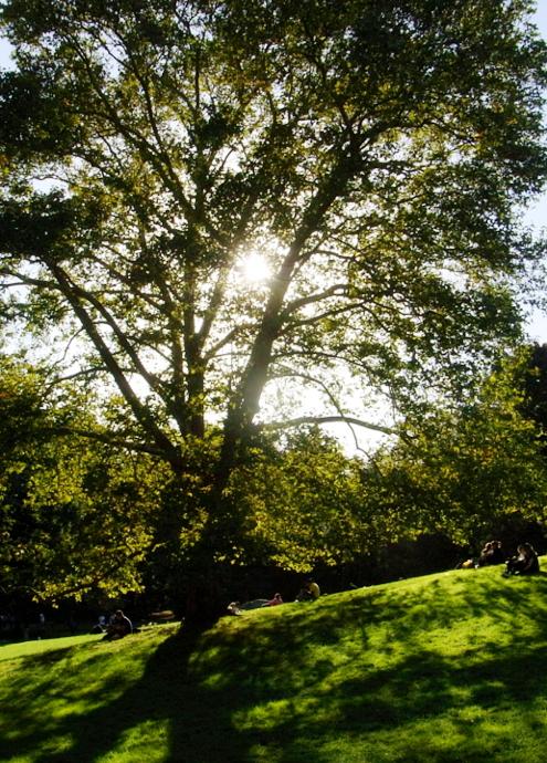 初秋のセントラルパークへお散歩に_b0007805_21515972.jpg