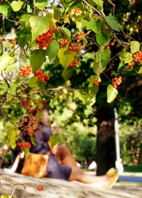 初秋のセントラルパークへお散歩に_b0007805_21524454.jpg