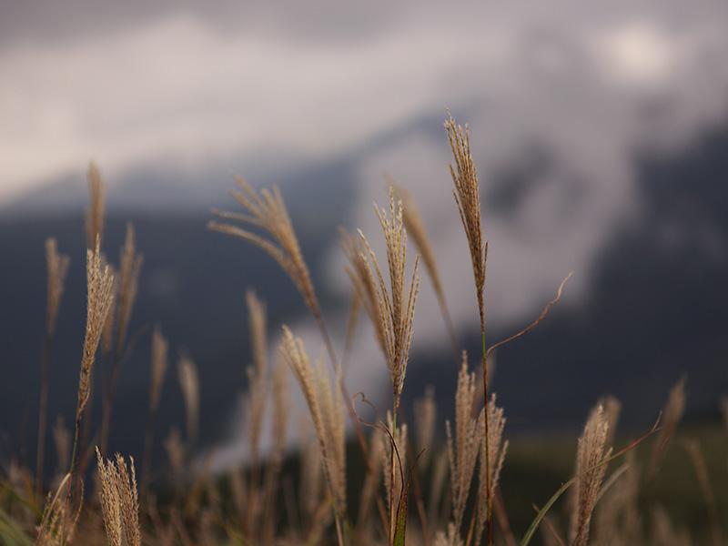 大分県はくじゅう、ミソコブシ山に行ってきました。その3_a0037907_22431889.jpg