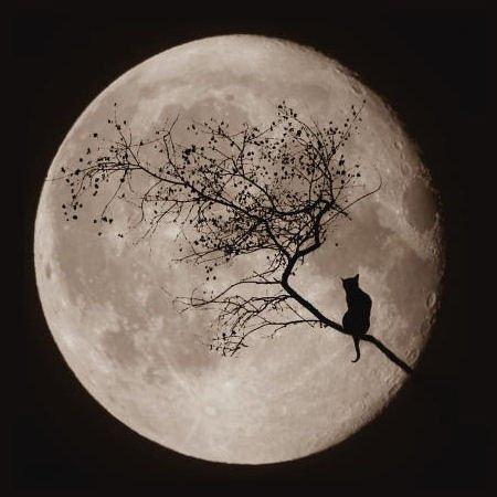 お月見会!_b0207642_016233.jpg