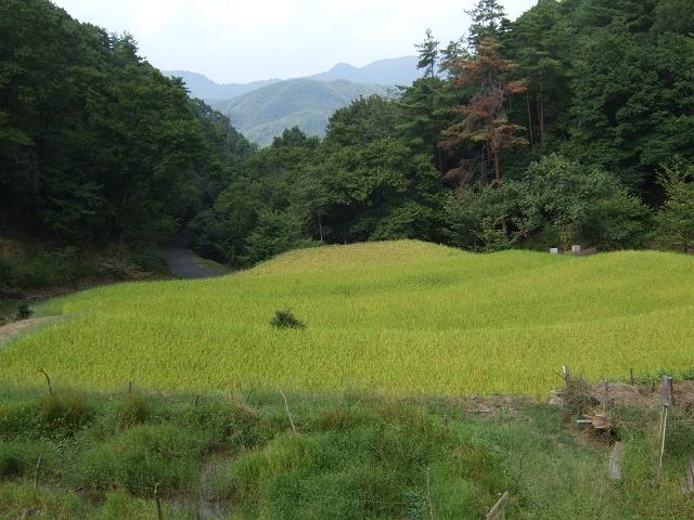 里山あーと村 2010年秋_b0095061_10505099.jpg