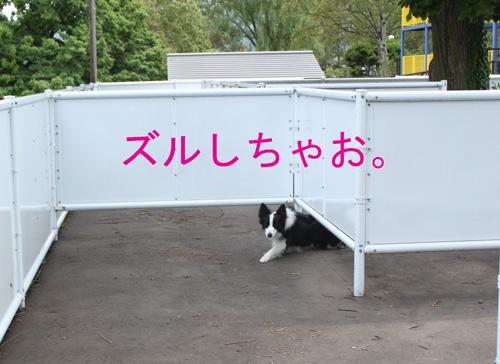 f0132070_19485379.jpg