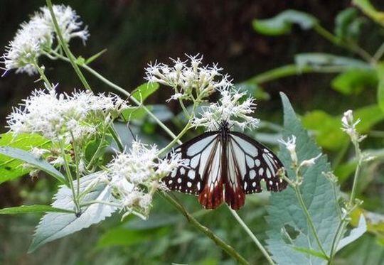 秋の花、秋の蝶_b0102572_1655726.jpg