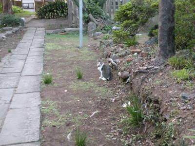 高島秋帆邸宅跡のお散歩猫_c0193077_0592617.jpg
