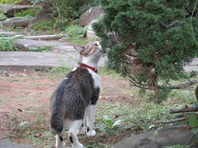 高島秋帆邸宅跡のお散歩猫_c0193077_105624.jpg
