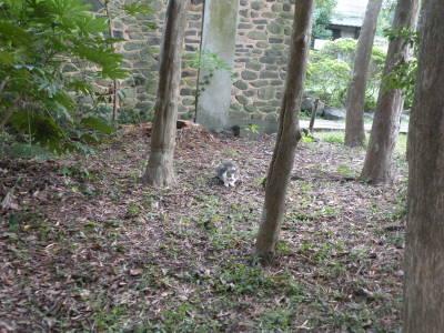高島秋帆邸宅跡のお散歩猫_c0193077_11349.jpg