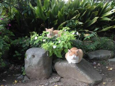 高島秋帆邸宅跡のお散歩猫_c0193077_12877.jpg