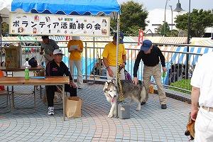 富士市の福祉祭り_d0050503_21412656.jpg