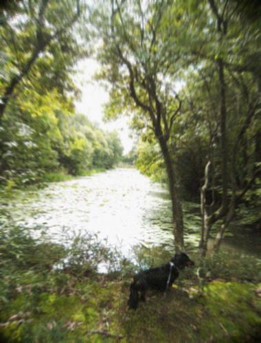 水辺の散歩道_d0077603_10532339.jpg