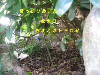 b0008217_126481.jpg