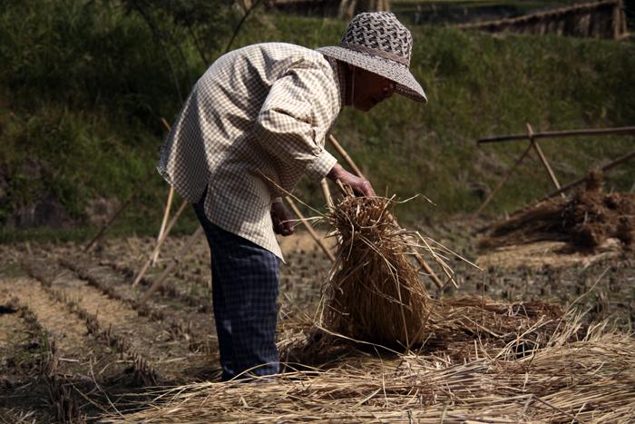 脱穀の日の家族 〜おばあちゃん〜_e0180823_2333841.jpg