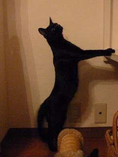 Francfranc猫型クッション猫 ろった編。_a0143140_23425764.jpg