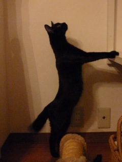 Francfranc猫型クッション猫 ろった編。_a0143140_23432684.jpg