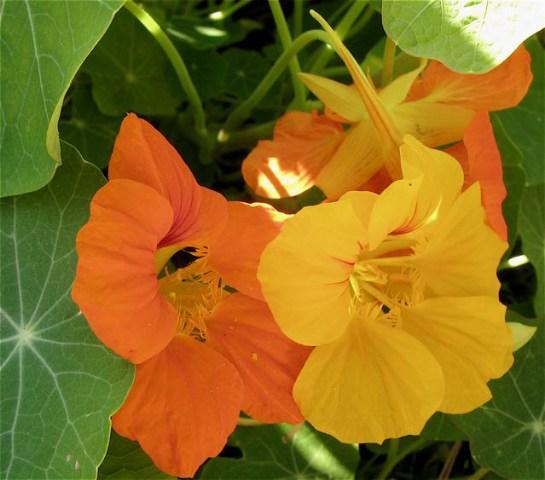 秋のパリ5区jardin des plantes(パリー植物園)_f0119071_4572074.jpg