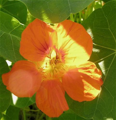 秋のパリ5区jardin des plantes(パリー植物園)_f0119071_63870.jpg