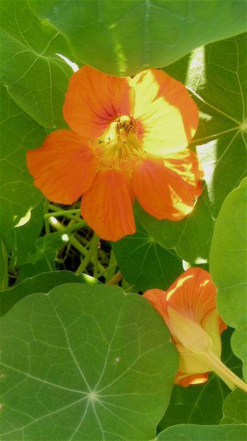 秋のパリ5区jardin des plantes(パリー植物園)_f0119071_644764.jpg
