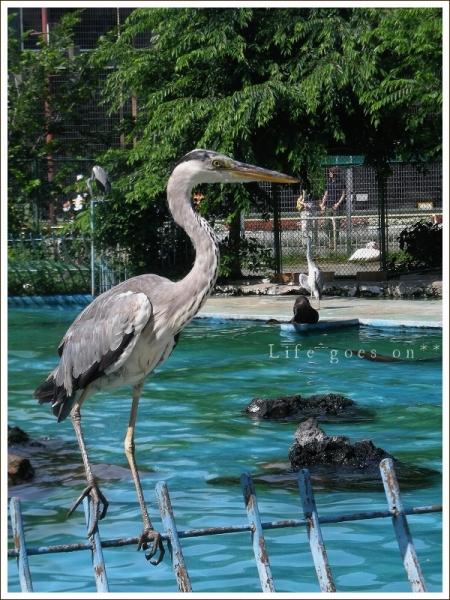 天王寺動物園 鷺??_b0155684_23262752.jpg