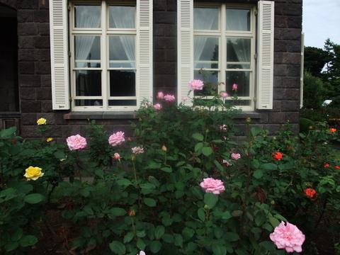 秋のバラ_b0206085_22445324.jpg