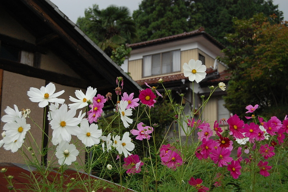 日本の風景。_c0180686_765016.jpg