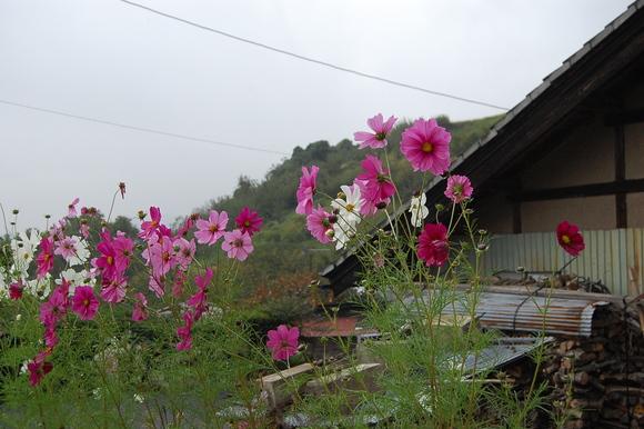 日本の風景。_c0180686_771346.jpg