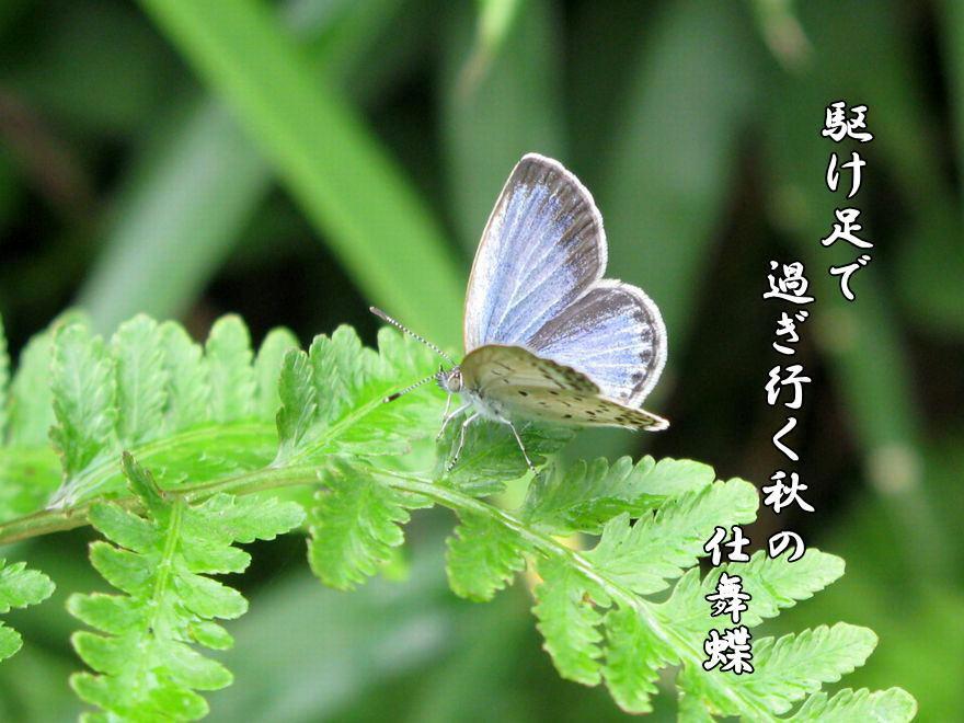 f0137096_16122517.jpg