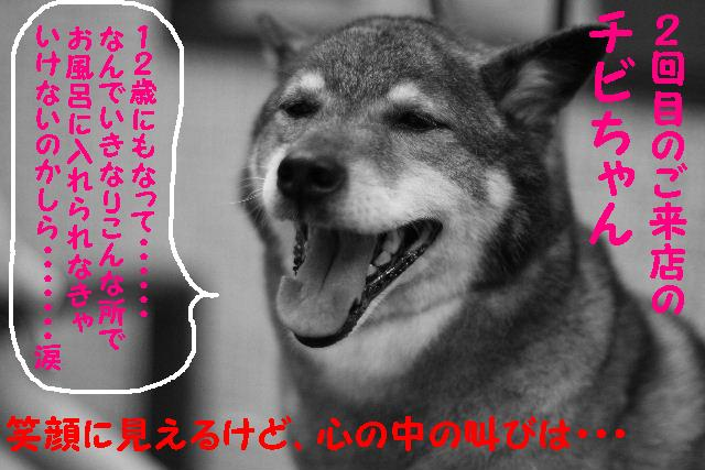 b0130018_1523113.jpg
