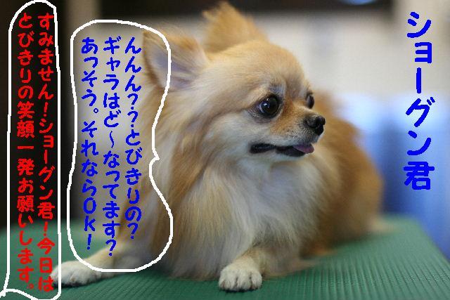 b0130018_155266.jpg