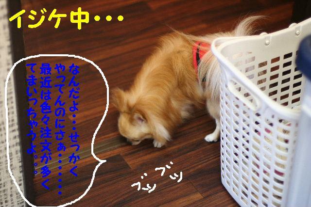 b0130018_15686.jpg