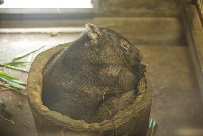 茶臼山の動物たち~小獣_a0091329_210095.jpg