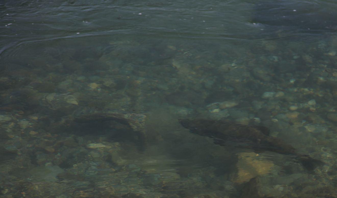 少し変だぞ魚沼の秋_e0150433_1837596.jpg