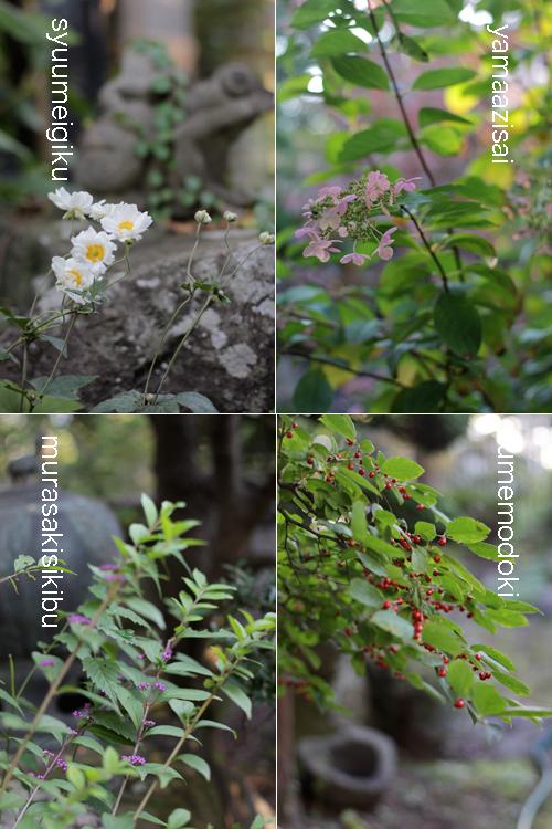 お庭の秋の草花_c0187754_20452896.jpg