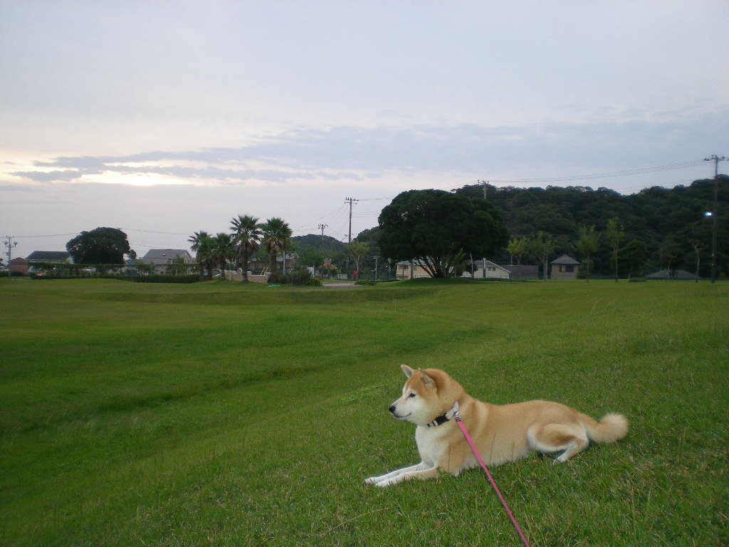 2010年10月18日(月)久しぶりの決闘?_f0060461_1017064.jpg