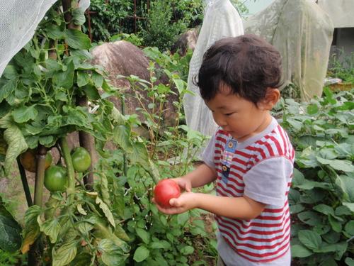 収穫の楽しみを子供達にも!!_b0201492_8202566.jpg