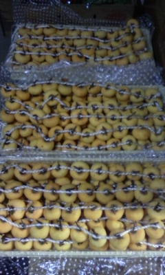 まだ稲刈りが終わらないけど・・・干し柿作りしてます。_d0026905_21211615.jpg