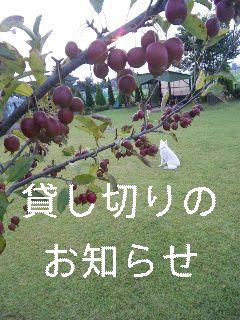 d0148408_2013154.jpg