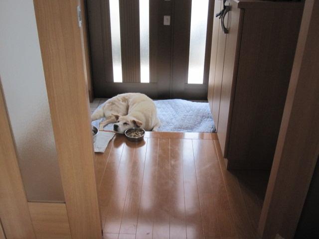 老犬べい_c0200314_20575899.jpg